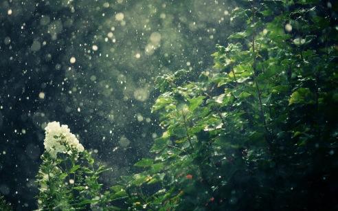 Rain-Falling-on-Trees