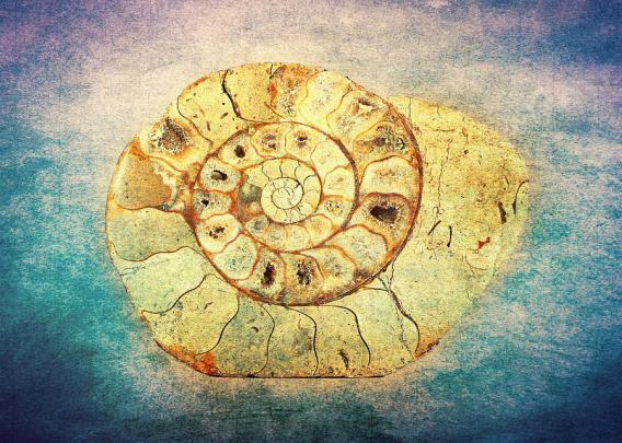 the-shell-fibonacci-the-golden-spiral-in-nature-denis-marsili